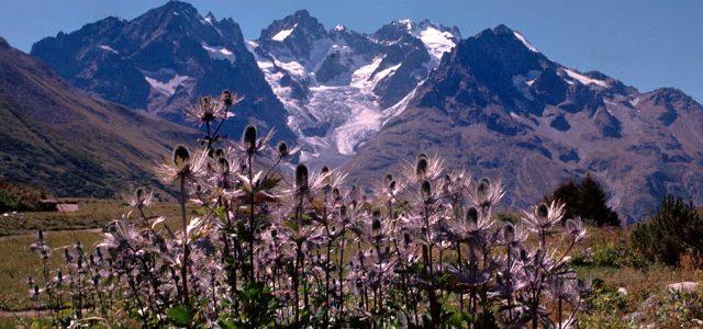 Stage volontaire en écologie végétale dans les Alpes proposé aux adhérents de l'ADNA