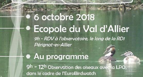 Sorties ornithologie et entomologie samedi 6 octobre 2018 à l'écopole du val d'allier (Péignat-sur-Allier)