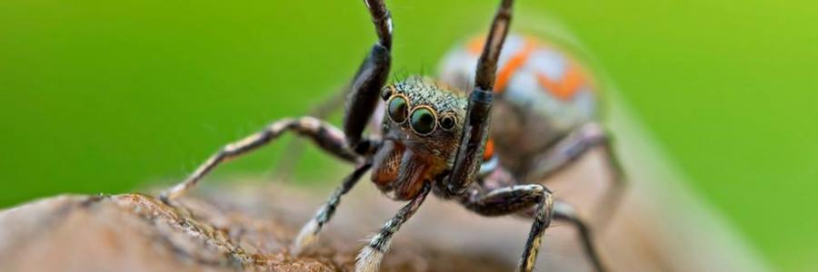 Les araignées asiatiques par A. Bourgeois – 9 octobre, 18h15, Amphi BV Cézeaux
