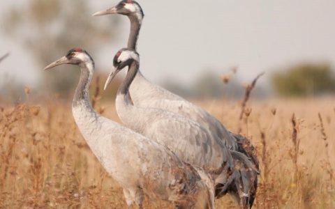 Sortie Ornithologie – Lucas Mazal – 15 décembre 2018