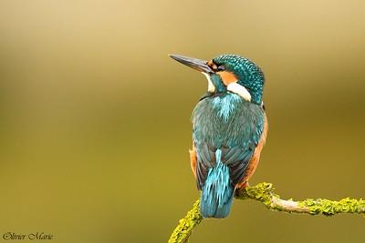 Sortie Ornithologique à l'Ecopole du Val d'Allier – 14 mars 2020